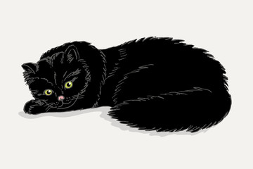 Black cat on a white background. Vector illustrations