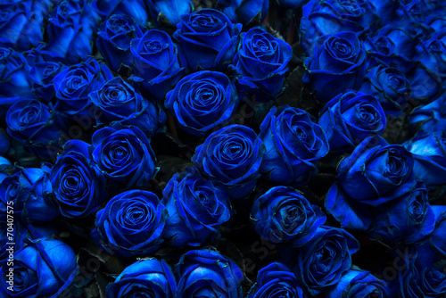 Canvas Textures blue roses