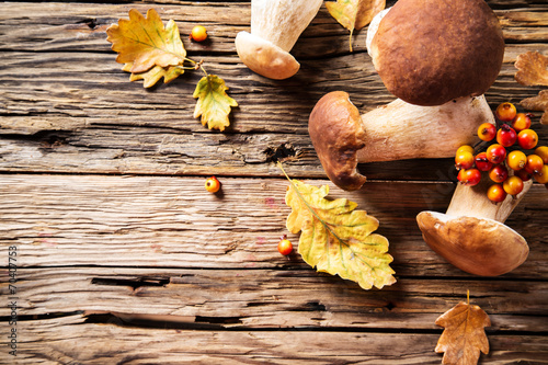 canvas print picture Ceps on wooden table