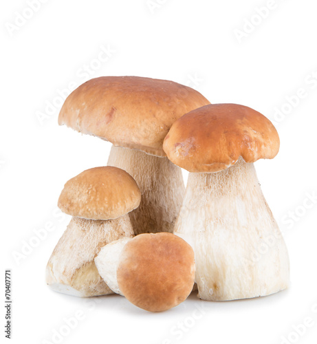 canvas print picture Ceps on white background