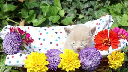 sleepy kitten in basket