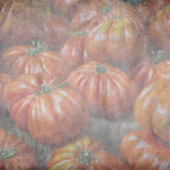 textured old paper background with tomato