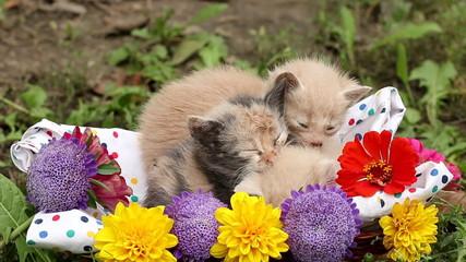 three sleepy kittens in basket