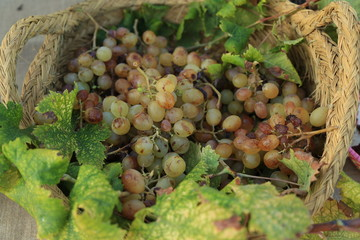 grapes-basket