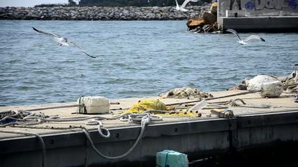 Seagulls on harbor fly away