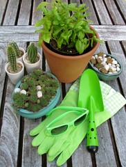 Plants and garden accessories