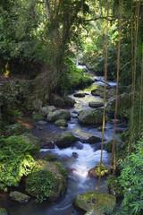 Mystic river in a tropic jungle
