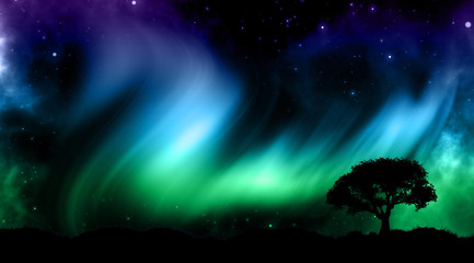 Night sky with norther lights with tree silhouettes