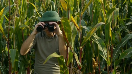 Ranger with binoculars in cornfield