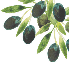 vector watercolor olive oil branches backdrop