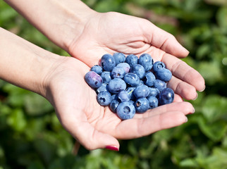 Blueberries in the woman's hands.