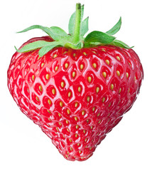 One rich strawberry fruit.