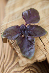 Purple basil leaves, rustic wooden background, close-up