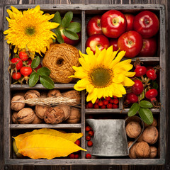 Autumn collage in box. Sunflower, wild rose, walnuts, apples.