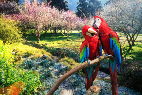 Foto op Aluminium Beijing The potrait of Blue & Gold Macaw