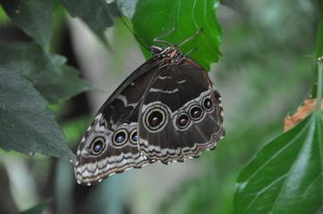 les papillons du chateau goulaine
