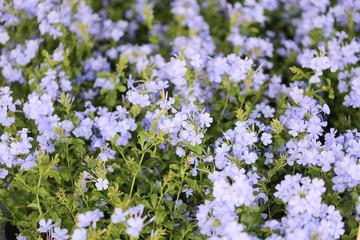 Purple flowers blooming.