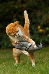 Katze hält Taube