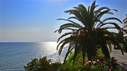 Palm tree on bright blue ocean horizon and clear sky