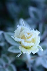 Blumen 310