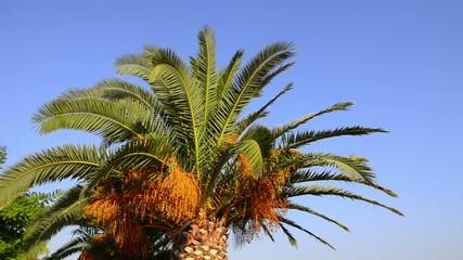 Palm tree on a bright blue sky