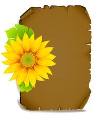 sunflower on parchment