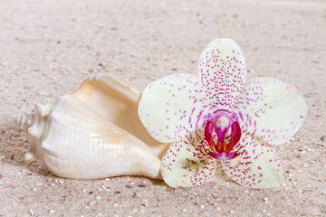 Orchid with zen stones in the sand