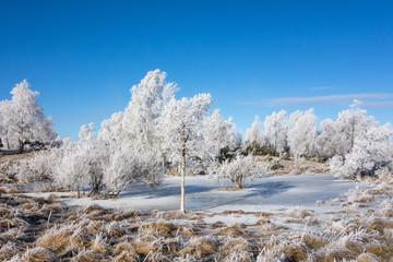 Frozen moor