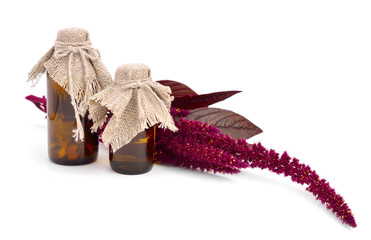 Amaranth oil with twig isolated.