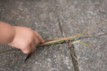 カマキリを触る子供の手