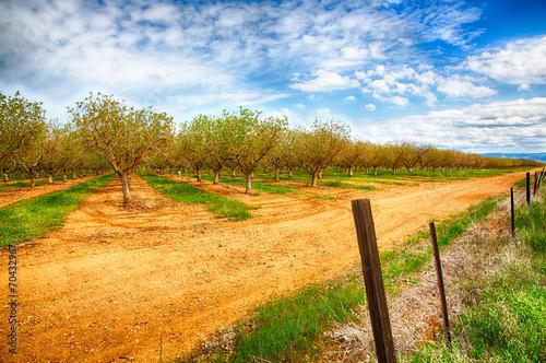 Fotobehang Cultuur Nut Trees