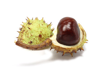 Green chestnut in the old peel on a white background