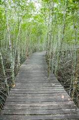 forest mangrove