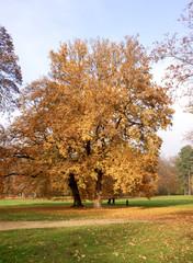 Herbst 03210