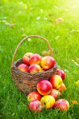 Basket with fresh apples in grass