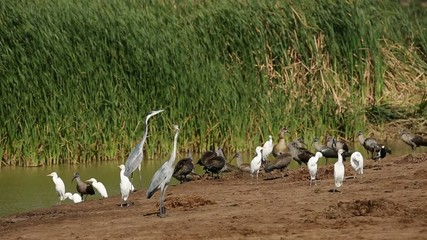 A variety of waterbirds gathered at a pond