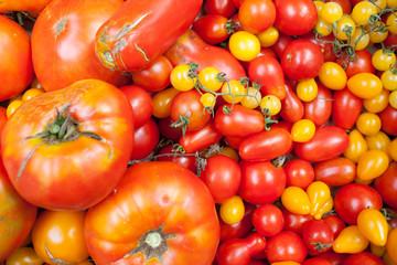 tomato selection