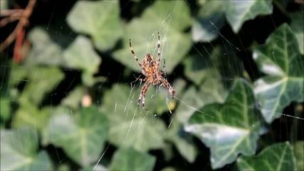 Spinne flüchtet aus ihrem Netz