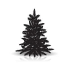 spruce silhouette with reflection and shadow