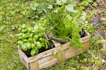 Gartenkräuter, herbs