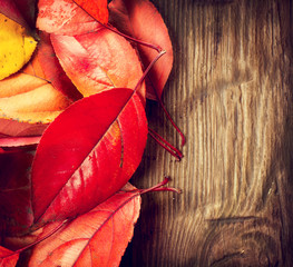 Autumn background. Colorful leaves on a wooden background