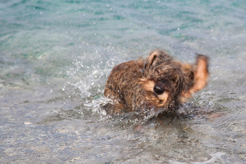 Cane bassotto in spiaggia