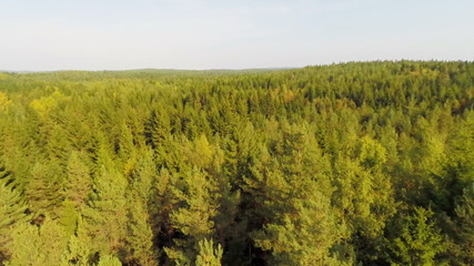 Flying over large forest in daylight