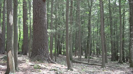 Tree Trunks, Bark, Nature