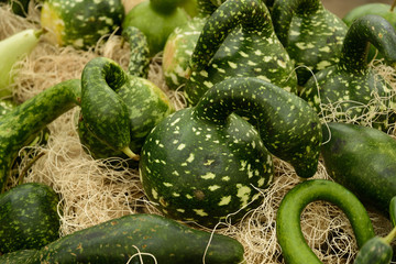 pile of gourds