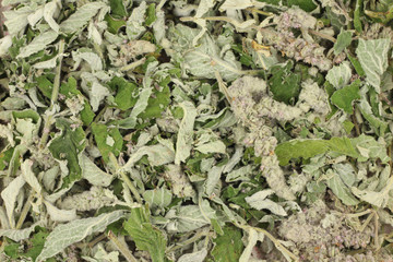 dried crushed mint leaves abstract background