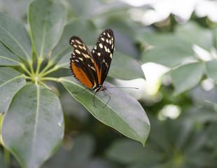 Schmetterling 01759