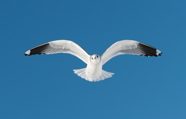 one white bird flies on sky