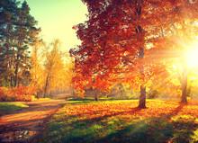 """Постер, картина, фотообои """"Autumn scene. Fall. Trees and leaves in sun light"""""""