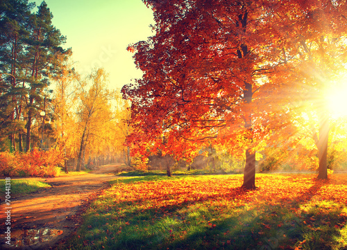 Autumn scene. Fall. Trees and leaves in sun light - 70441318